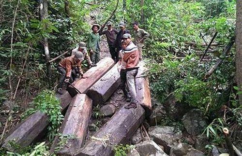 Nhóm người đang vận chuyển số gỗ khai thác được. (Ảnh lấy từ trang Facebook Vũ Đình Lộc)