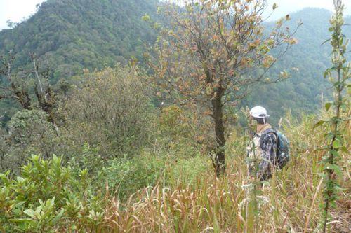 Rừng của VQG Bidoup Núi Bà cần được bảo vệ. (Ảnh: Khắc Dũng)