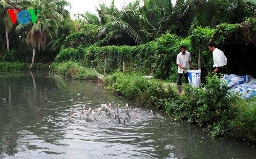 Áo nuôi cá bị ô nhiễm nghiêm trọng