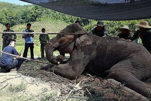 Cận cảnh màn giải cứu chú voi nặng 5 tấn bị kẹt trong vũng lầy