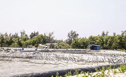 Các hồ tôm được triển khai trong rừng phòng hộ. (Ảnh: Công an TP Hồ Chí Minh)