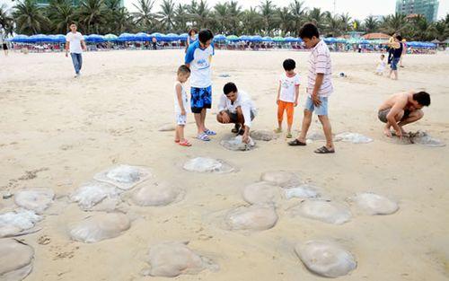 Huy động lực lượng thu gom sứa chết dạt vào các bãi biển