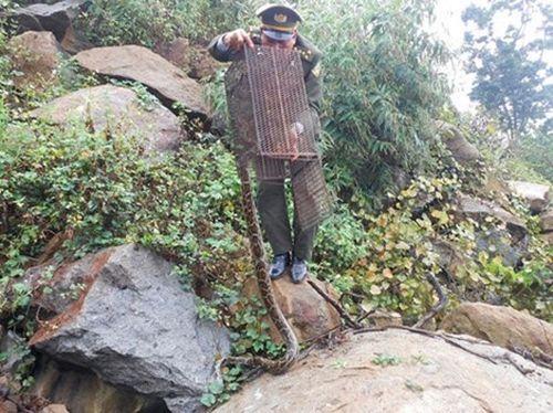 Thả trăn gấm và khỉ mắt vàng về khu bảo tồn thiên nhiên Sơn Trà