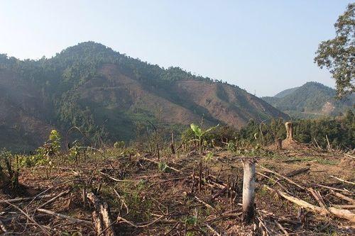 Phá, đốt rừng để… trồng cây