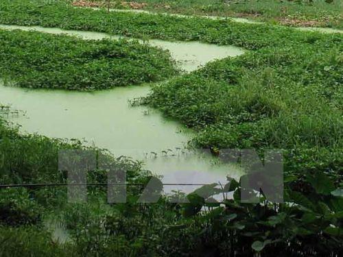 Nước ao chuyển màu xanh vì nhiễm độc chì (Ảnh minh họa: Quốc Việt/TTXVN)