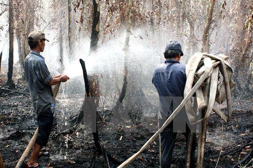 Tập trung dập lửa trong một vụ cháy rừng ở Công ty lâm nghiệp U Minh hạ. (Ảnh: Lê Huy Hải/TTXVN)