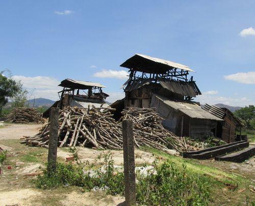 Nguồn củi đốt lò đe dọa tài nguyên rừng đang ngày càng cạn kiệt. (Ảnh: Quế Mai)
