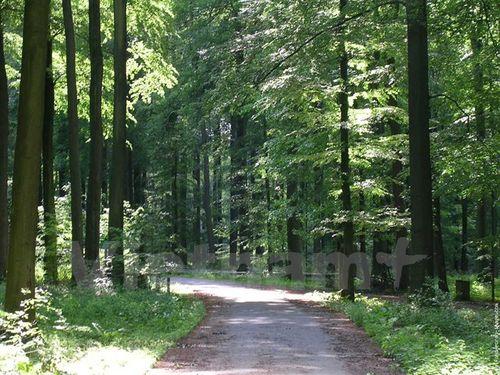 Thủ đô Brussels của Bỉ – khu rừng trong thành phố hiện đại