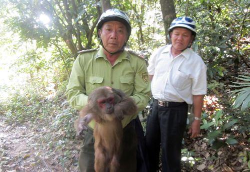 """Bảo vệ """"lá phổi xanh"""" Sơn Trà"""
