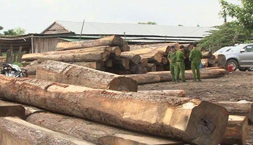 Đắk Lắk: Phát hiện bãi tập kết hơn 100m³ gỗ lậu
