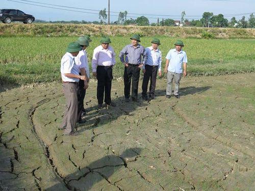 Lãnh đạo tỉnh Nghệ An kiểm tra công tác chống hạn tại huyện Nam Đàn. (Ảnh: Nguyễn Văn Nhật/Vietnam+)