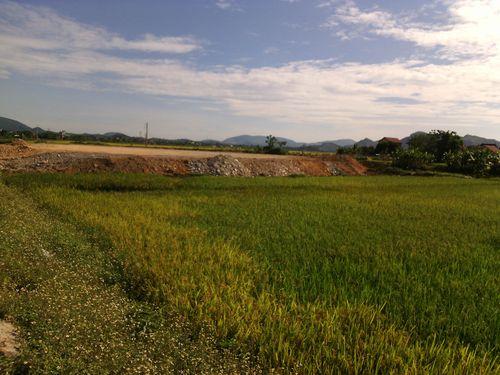 """Hàng nghìn m2 đất lúa đang bị """"bức tử"""" trước mặt công sở UBND thị trấn Hà Trung. (Ảnh: Thanh Tâm)"""