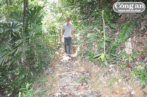 Những con đường mà lâm tặc mở trong rừng để kéo gỗ.  (Ảnh: Công an TP Đà Nẵng)
