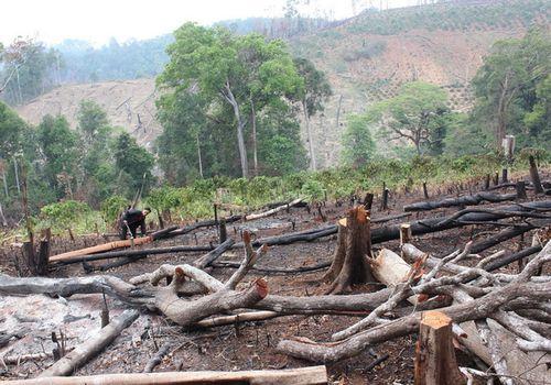 Có cán bộ liên quan đến phá rừng