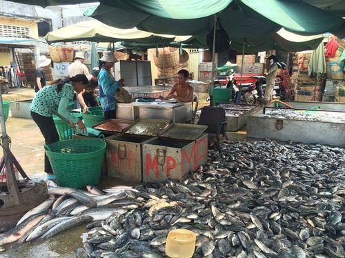 Tại các chợ ở Campuchia, các loại cá đều nhau tăm tắp, không có cá quá to và tuyệt nhiên không có cá con. (Ảnh: nongnghiep.vn)