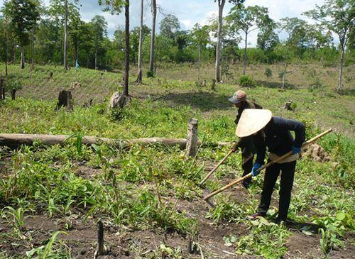 Nhiều hộ dân được giao đất rừng không hề biết khu đất đang nằm trong khu vực chồng lấn, dẫn đến tranh chấp. (Ảnh: Đại Đoàn Kết)
