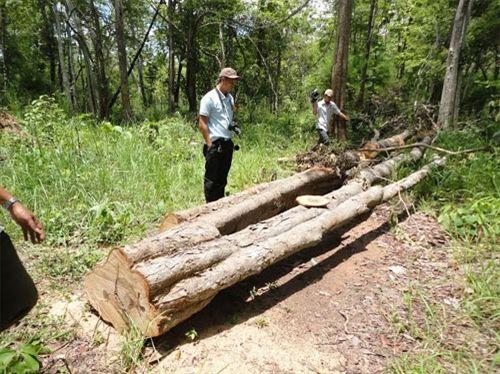 Đắc Lắc: Lâm tặc chặt hạ gỗ quý ở Vườn Quốc gia Yok Đôn