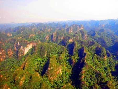Quang cảnh rừng treo trên núi đá vôi (Ảnh: MQ)