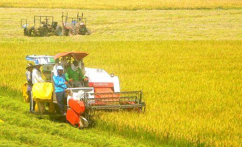 Những tín hiệu tích cực của nông nghiệp ĐBSCL