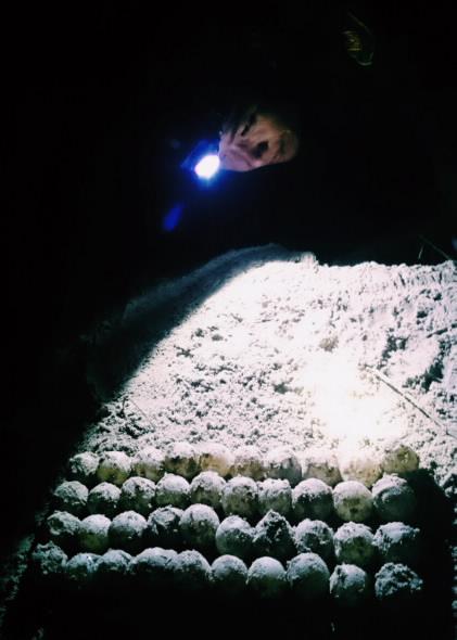 Cứu hộ, thả 150.000 rùa con về biển
