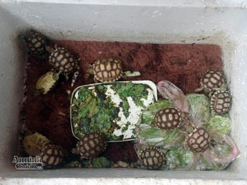 Mua bán rùa quý hiếm trên mạng internet