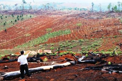 Hàng trăm ha rừng bị tàn phá nằm la liệt tại Công ty Gia Nghĩa