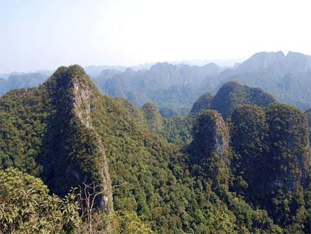 Quần thể bách xanh núi đá ở Phong Nha – Kẻ Bàng (Ảnh: VQG PN – KB cung cấp)