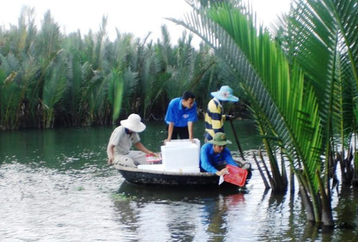 Quảng Ngãi: Hơn 21 tỷ đồng đầu tư trồng rừng ngập mặn ven biển