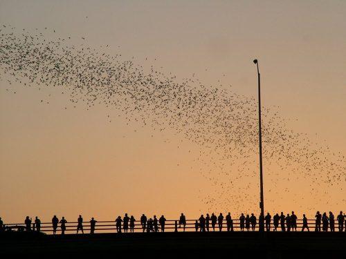 Màn trình diễn âm thanh vào mùa Hè của 1,5 triệu con dơi bay qua Texas. (Nguồn: BBC Travel)
