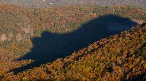 Cashier là thị trấn ở miền Trung vùng núi Blue Ridge. Cứ 30 phút một lần từ sau 5 giờ 30 phút chiều vào cuối tháng 10 tới đầu tháng 11 và giữa tháng Hai tới đầu tháng Ba, mọi người có thể nhìn thấy bóng con gấu lớn trên rừng. (Nguồn: Huffington Post)