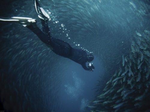 Cảnh tượng tuyệt đẹp được hình thành từ hàng triệu con cá mòi bơi từ vùng nước lạnh Nam Phi sang bờ biển KwaZulu-Natal. (Nguồn: Daily Mail)