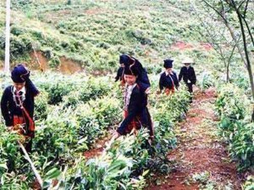 Hoàn thiện chính sách bảo vệ, phát triển rừng gắn với hỗ trợ đồng bào DTTS