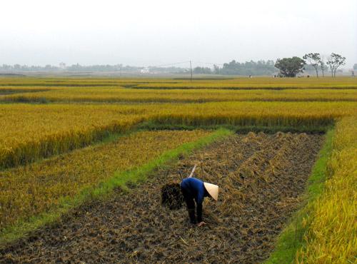 Biến đổi khí hậu: Nông dân chịu rủi ro nhất