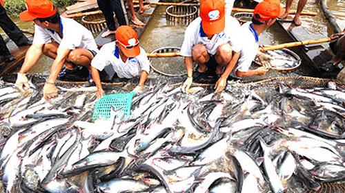 Xuất khẩu thủy sản của Việt Nam sang Hàn Quốc sẽ tăng sau khi VKFTA được ký kết vào đầu năm 2015 (Ảnh: Hànộimới)