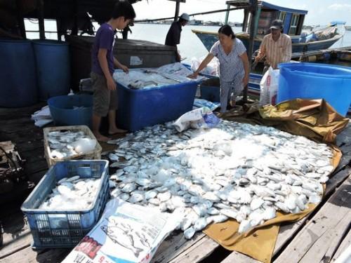 Cá chết đồng loạt ở các lồng bè (Ảnh: nld.com.vn)