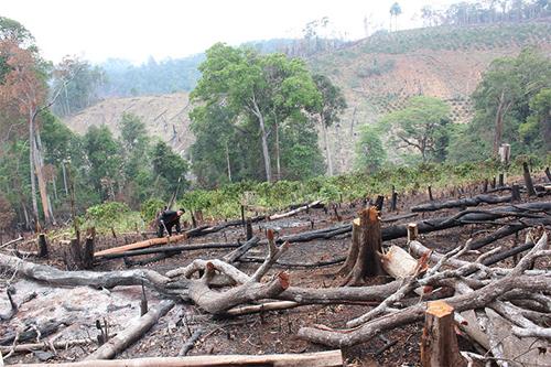 9.000ha rừng đầu nguồn tan hoang vì doanh nghiệp tắc trách