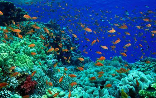 Nền kinh tế đại dương 24 nghìn tỷ USD đang bị đe dọa nghiêm trọng