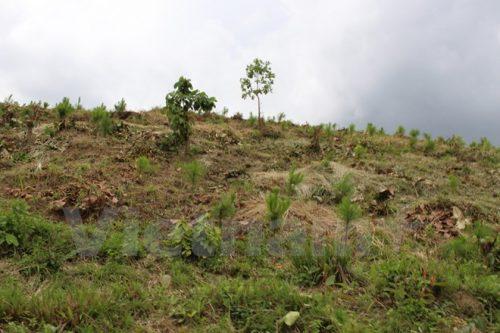 Những quả đồi bị cạo trọc cây ở huyện Di Linh, tỉnh Lâm Đồng. (Ảnh: Hùng Võ/Vietnam+)