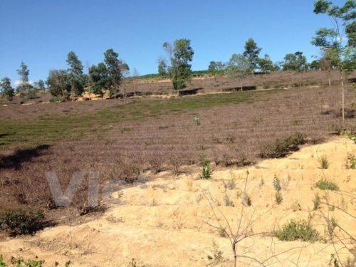 Đất đai bị hoang hóa, xí nghiệp chè tại huyện Thanh Chương, tỉnh Nghệ An thiếu nguyên liệu sản xuất. (Ảnh: H.V/Vietnam+)