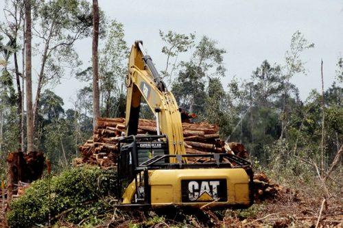 Xe ủi của một công ty đang phá rừng ở Indonesia (Ảnh: mongabay.com)