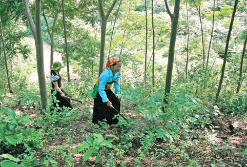 Bảo vệ rừng gắn với giảm nghèo đồng bào dân tộc thiểu số