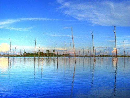 Tàn dư của rừng nhiệt đới dưới chân đập thủy điện (Ảnh: Horácio Fernandes)