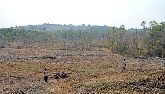 Mở rộng phát triển cao su đe dọa các khu bảo tồn ở Đông Nam Á
