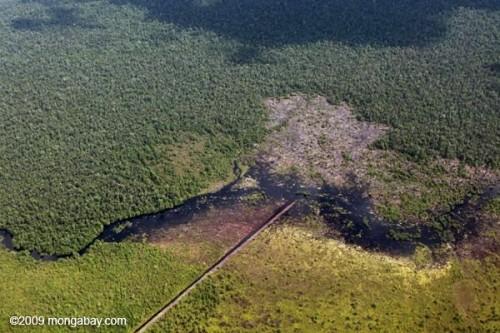Kênh tháo nước từ một khu rừng trên đất than bùn tại Central Kalimantan, Indonexia (Ảnh: Rhett A. Butler)