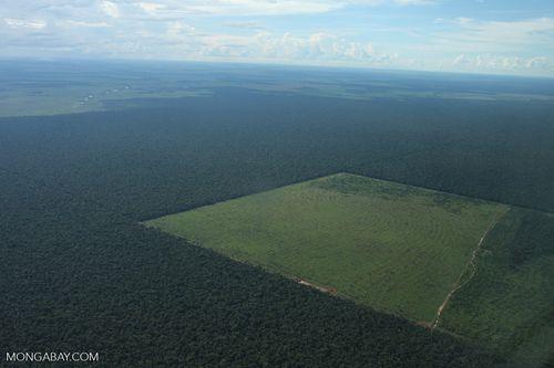Hạn chế phá rừng ở Brazil có thể cứu hàng ngàn mạng sống