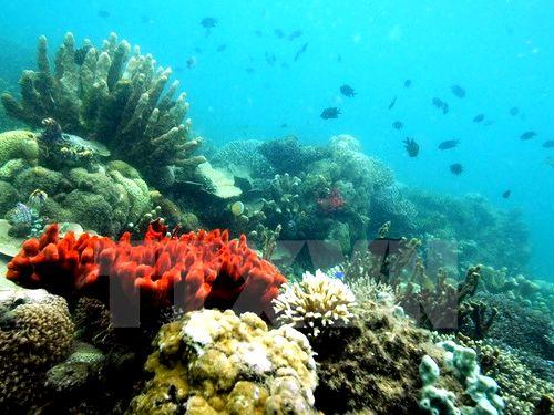 Mỹ và Cuba cân nhắc thiết lập khu bảo tồn chung trên biển