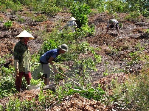 Công nhân Công ty Lâm nghiệp Đô Lương tổ chức trồng rừng vụ Thu (Ảnh : Nguyễn Văn Nhật/TTXVN)