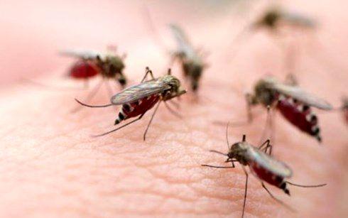 Bộ Y tế khuyến cáo phòng chống dịch bệnh sốt xuất huyết