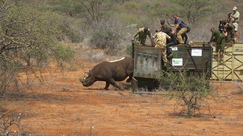 Tê giác đen được chuyển tới khu bảo tồn cộng đồng