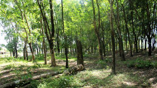 Tăng diện tích trồng mới rừng